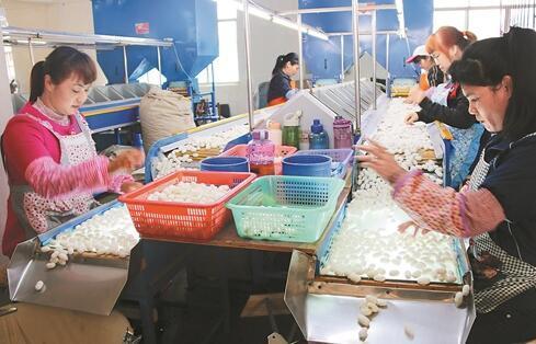 广西象州年出口精品蚕丝1000万元