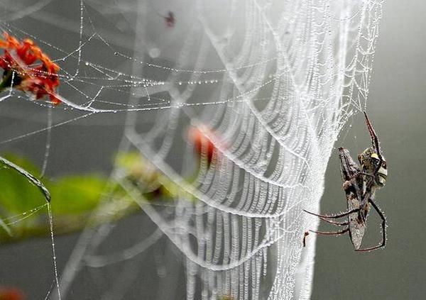 仿蜘蛛丝导电水凝胶纤维 可用于纺织材料可拉伸器件