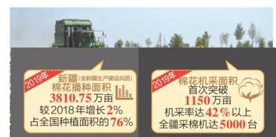 2019年新疆棉花机采面积首次突破1150万亩